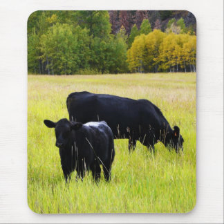 Black Angus Pair in Field Mouse Pad