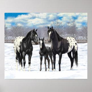 Black Appaloosa Horses In Snow Poster