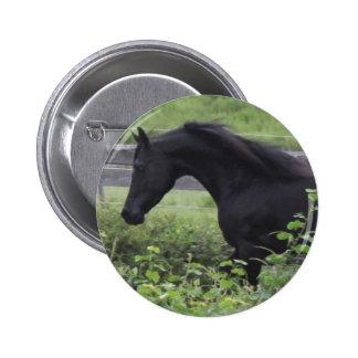 Black Arabian Stallion Pinback Buttons