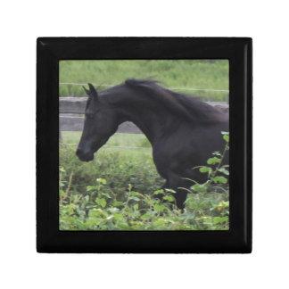 Black Arabian Stallion Small Square Gift Box