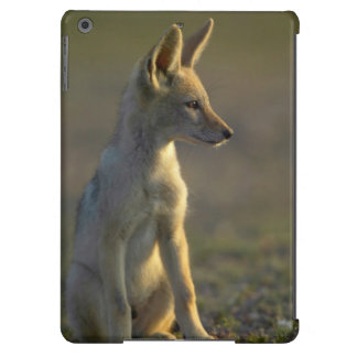 Black-Backed Jackal (Canis Mesomelas) Pup iPad Air Cover