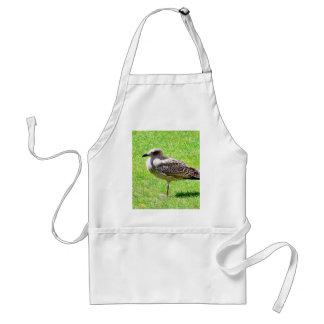Black Beaked Sea Bird On Grass Aprons