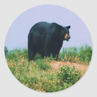 black bear classic round sticker
