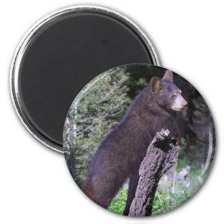 Black Bear Cub 6 Cm Round Magnet