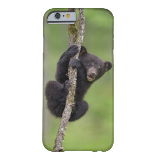 Black bear cub playing, Tennessee Barely There iPhone 6 Case