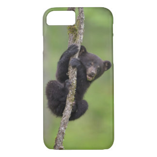Black bear cub playing, Tennessee iPhone 8/7 Case