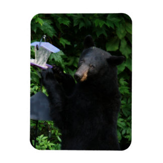 "Black Bear - ""Cubby Okay You Caught Me!"" 3"" X 4"" Rectangular Photo Magnet"