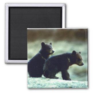 Black Bear cubs Magnet