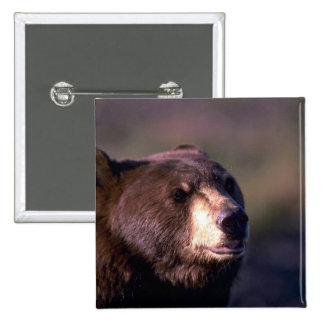 Black Bear head shot Buttons