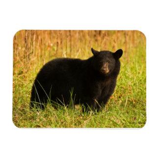 Black Bear In Fall Smoky Mountain Souvenir Rectangular Photo Magnet