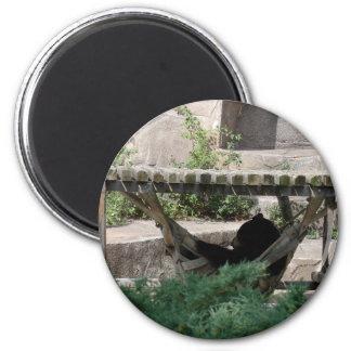Black Bear in Hammock Magnet