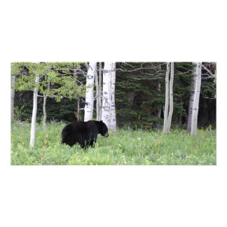 Black Bear in the Birches Photo Cards