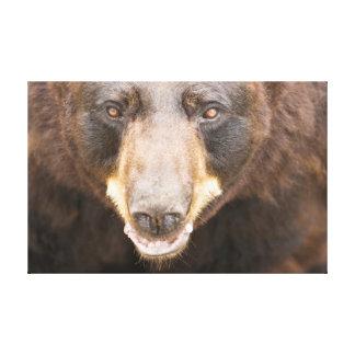 Black Bear, Michigan Stretched Canvas Print