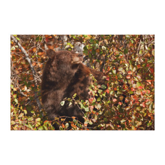 Black bear searching for autumn berries canvas print