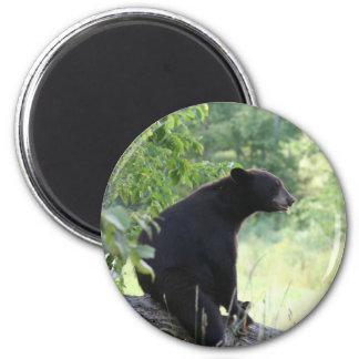 black bear sitting in tree 6 cm round magnet