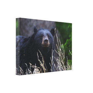 black bear smile stretched canvas print
