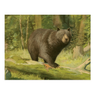 Black Bear Stepping on a Tree Trunk Postcard