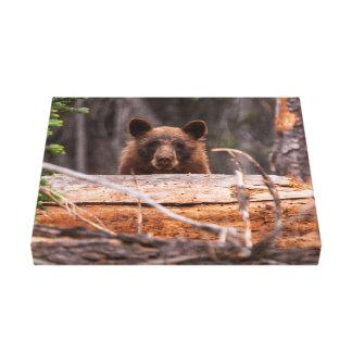 Black Bear Stretched Canvas Print