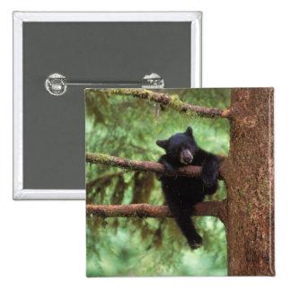 black bear, Ursus americanus, cub in a tree 15 Cm Square Badge