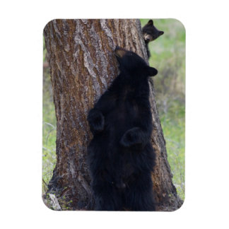 Black Bears, Sow and Cub Rectangular Photo Magnet