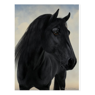 Black Beauty - Black Friesian Horse Portrait Postcard