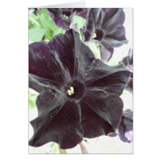 Black Beauty Card