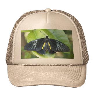 Black Beauty Hats