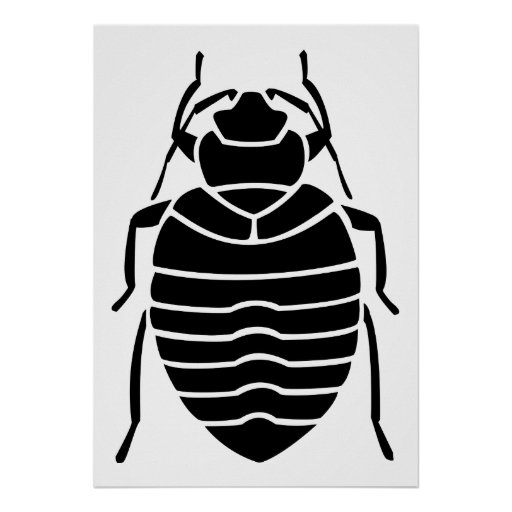 Black Bedbug Insect Poster