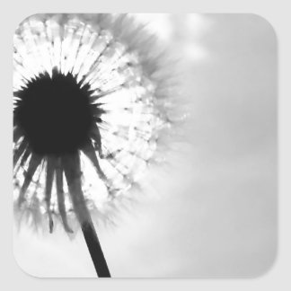 Black blank dandelion Black and White Dandelion Square Sticker