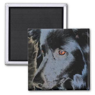 Black Border Collie Face Dog Magnet