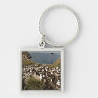 Black-browed Albatross, Thalassarche Key Chains