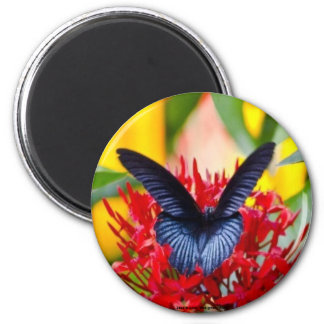 Black Butterfly3 Decorative Refrigerator Magnets