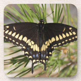 black butterfly cork coaster