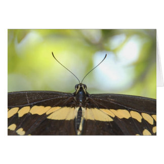 Black Butterfly Note Card