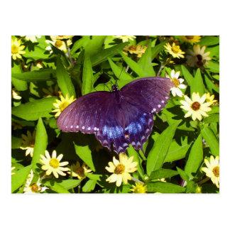 Black Butterfly On Flowers Postcard
