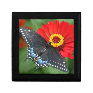Black Butterfly on Red Zinnia Flower Jewelry Box