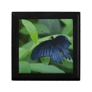 Black Butterfly Small Square Gift Box