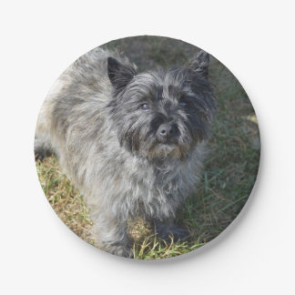 Black Cairn Terrier 7 Inch Paper Plate