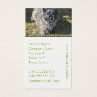 Black Cairn Terrier Business Card