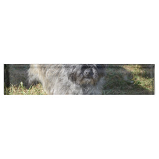 Black Cairn Terrier Desk Name Plate