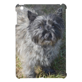 Black Cairn Terrier iPad Mini Covers