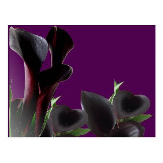 Black Calla Lily Flowers Postcard