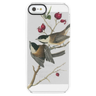 Black-capped Chickadee by Audubon Clear iPhone SE/5/5s Case