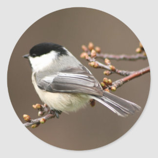 Black Capped Chickadee Classic Round Sticker