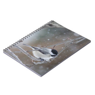Black-capped Chickadee - Songbird Notebook