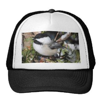 Black-capped Cickadee Cap