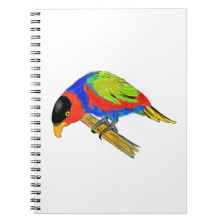 Black-capped Lory Notebook