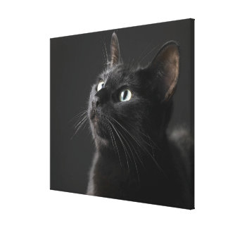Black cat against black background, close-up stretched canvas prints