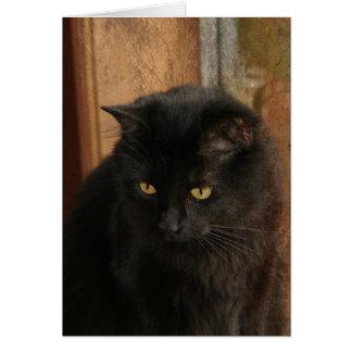Black Cat, Amber Eyes, Earth Tones Textured Back Card