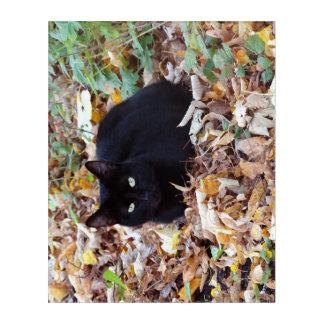 Black Cat  Autumn Photo  Acrylic Wall Art